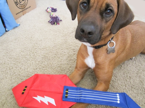 Barkbox January 2016 Review plus 10% Off Code